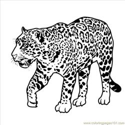 Jaguarbnw coloring page