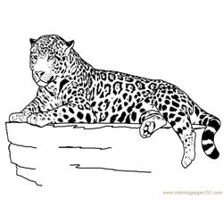 Tiger new 41 coloring page