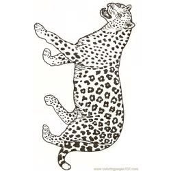 Leopard Free Coloring Page for Kids