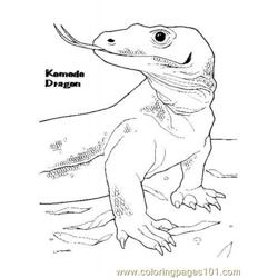 Komodo dragon 2 coloring page