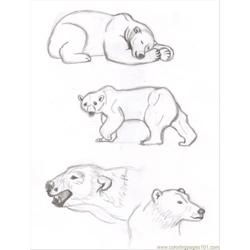 Polar Baer4 Free Coloring Page for Kids