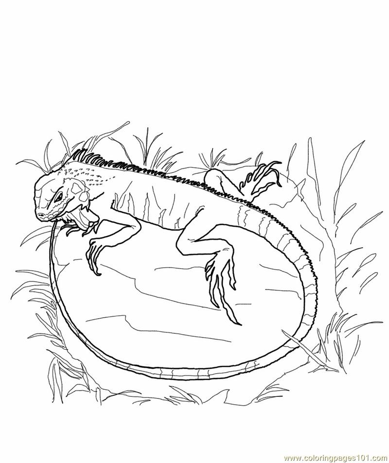 Green iguana lizards Coloring Page