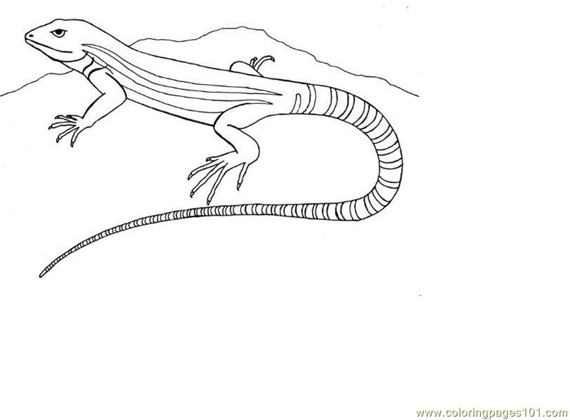 Line Drawing Lizard : Lizard coloring page free pages