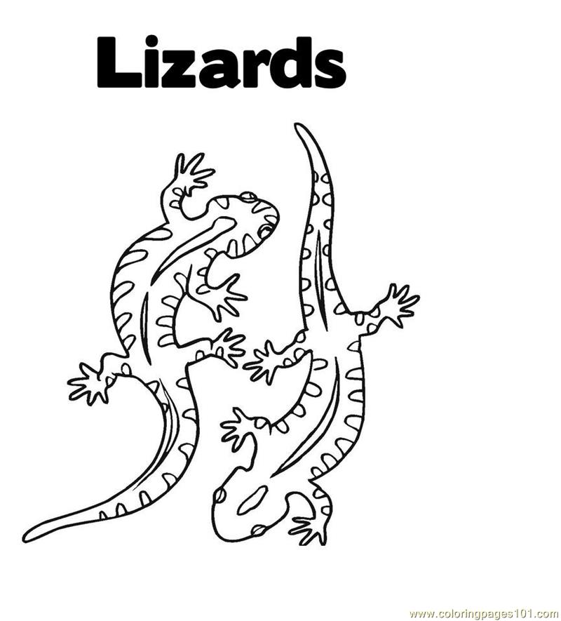 Lizard Coloring Page Free Lizard