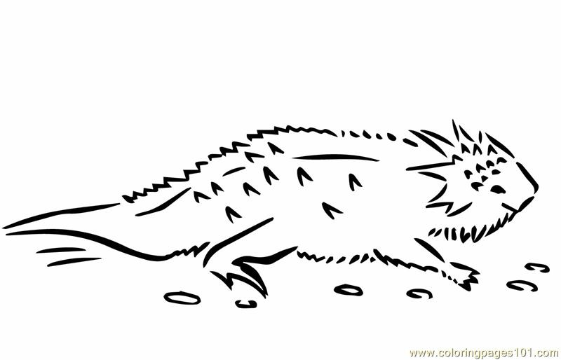 Lizard horned toad Coloring Page - Free Lizard Coloring ...