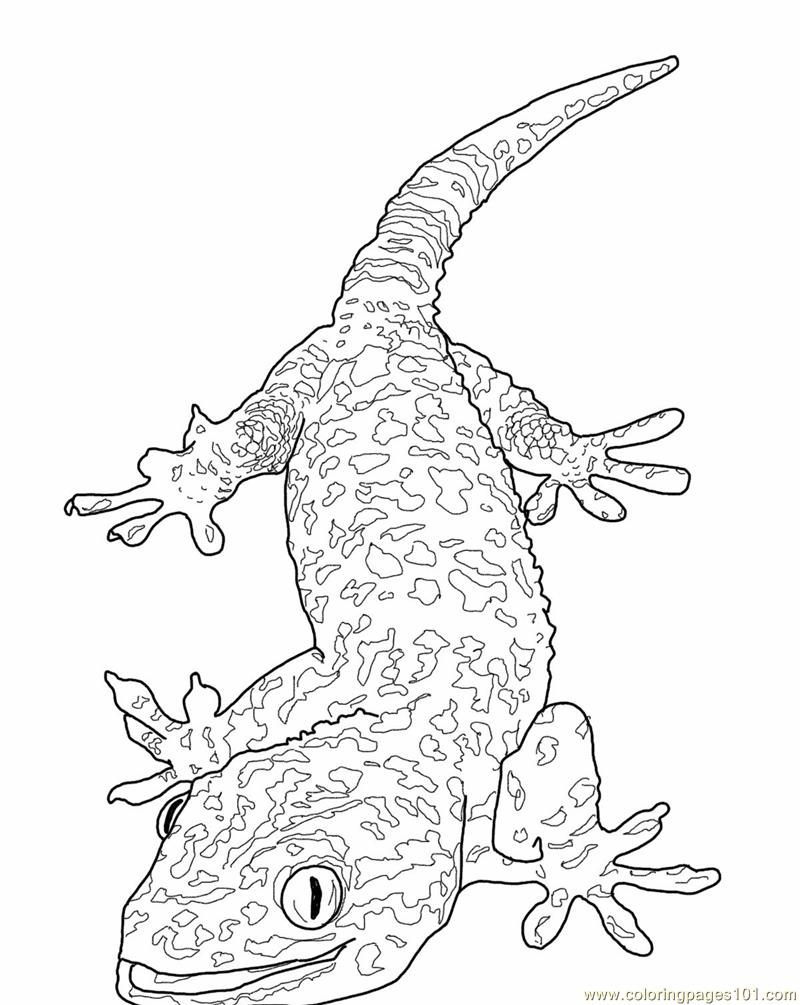 Lizards coloring pages to print - Tokay Gecko Lizard Coloring Page
