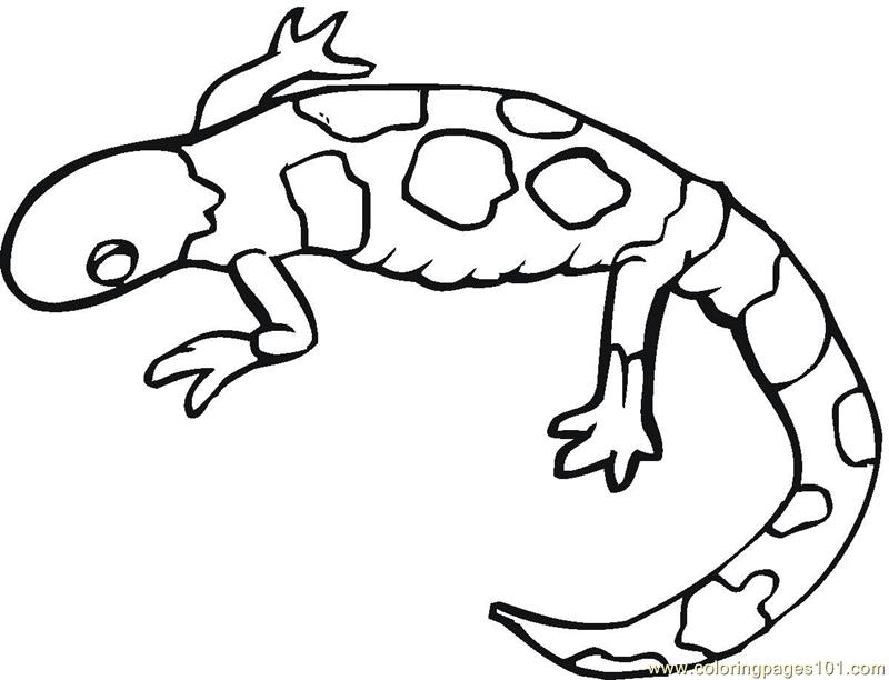 Gecko lizards Coloring Page
