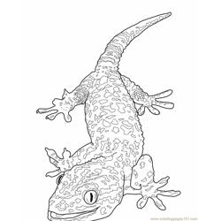 Tokay gecko lizard Free Coloring Page for Kids