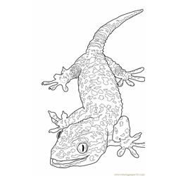 Tokay-lizard Free Coloring Page for Kids