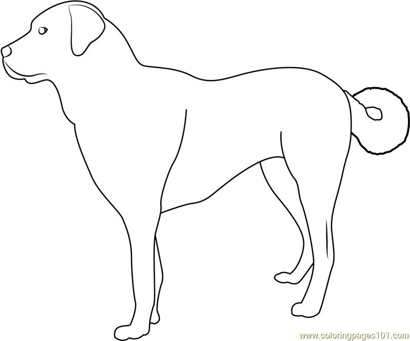 Anatolian Shepherd Dog Coloring Page
