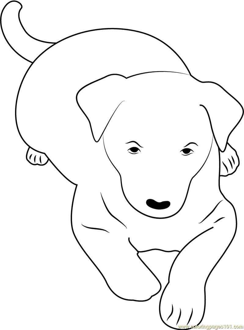 Australian Kelpie Coloring Page - Free Dog Coloring Pages