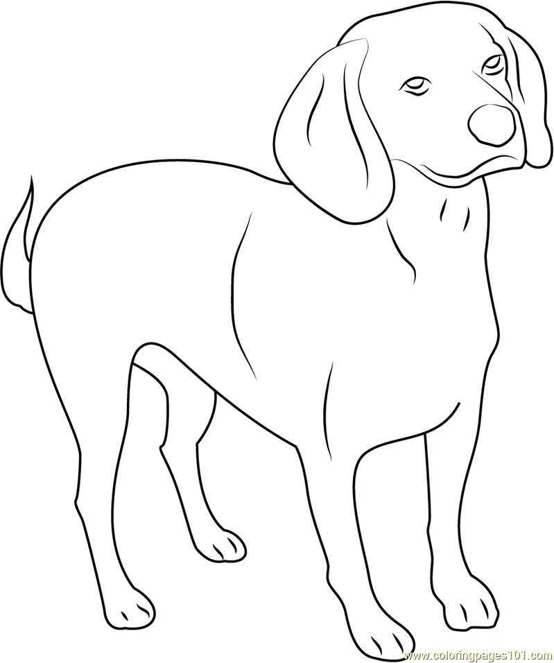 Beagle English Purebred Dog Coloring Page