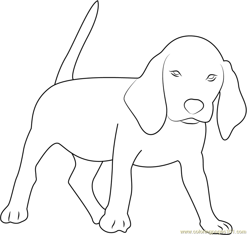 Beagle Coloring Page Free Dog
