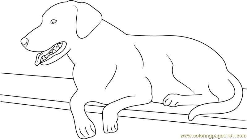 kleurplaat hond labradoodle | boerderij kleurplaat