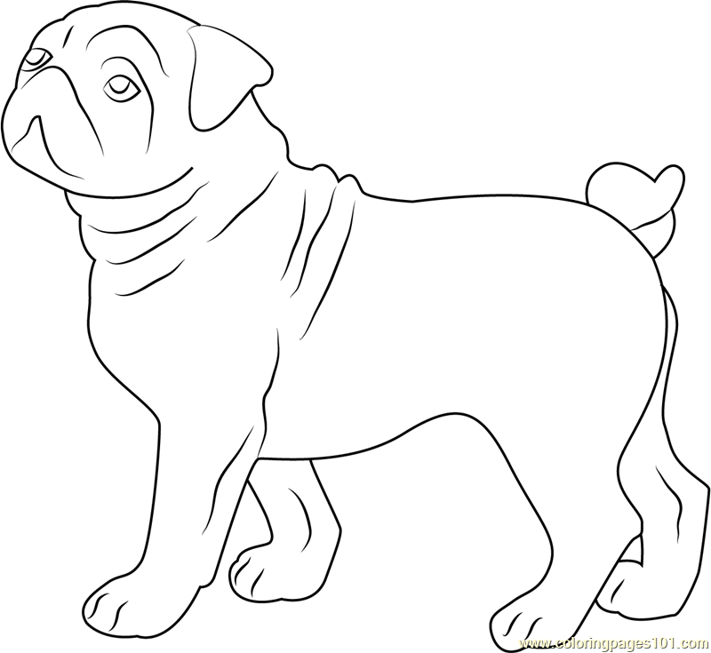 Cute Bull Dog Coloring Page