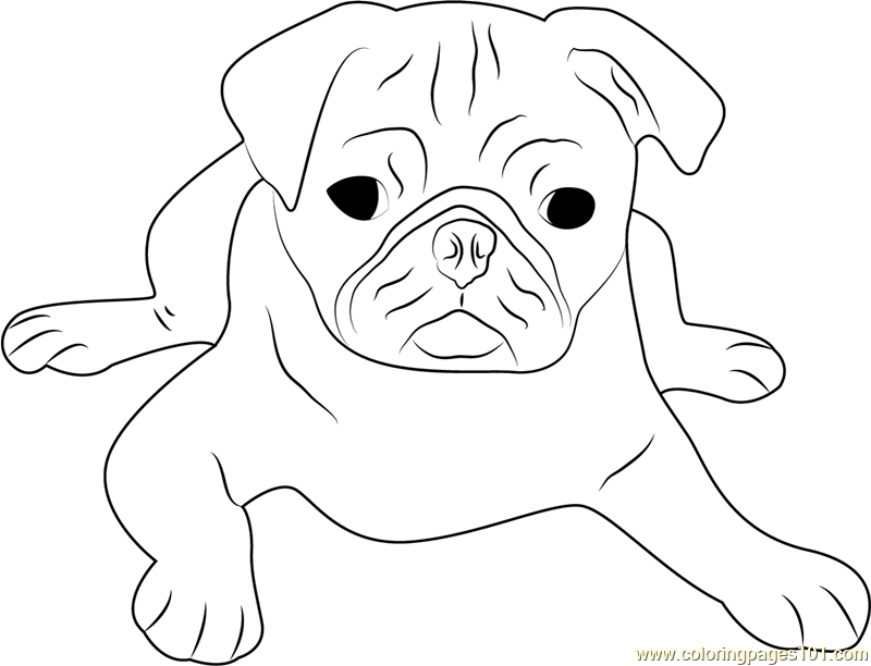 Cute Pug Face Coloring Page Free Dog Coloring Pages