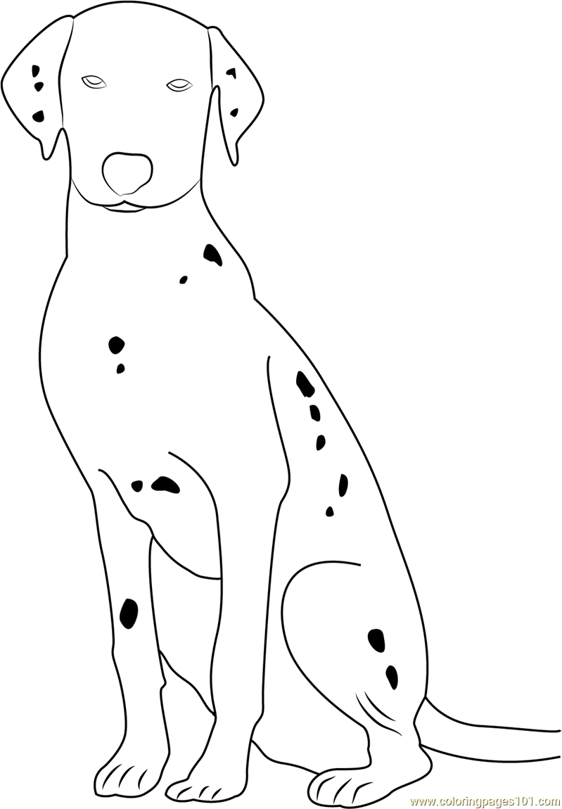 Dalmatian Dog Portrait Coloring Page