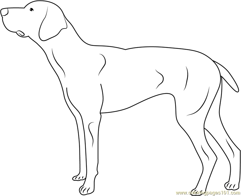 Doberman Coloring Page Free Dog