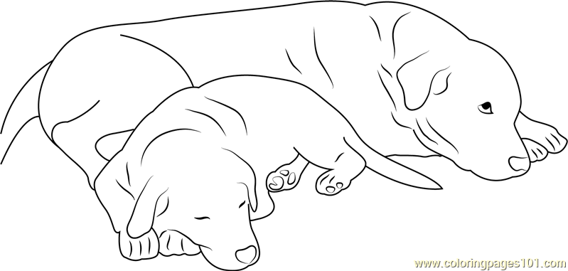 Dog Sleeping With Mother Coloring Page