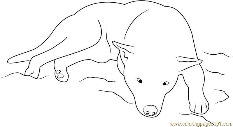 Dog Sleeping Coloring Page