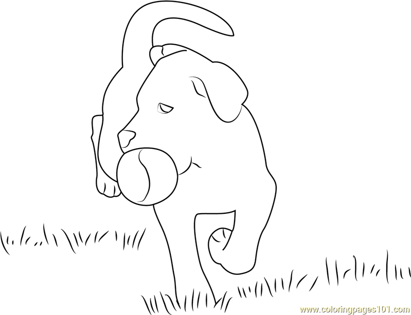Dog Playing With Ball Coloring Page Free Dog Coloring