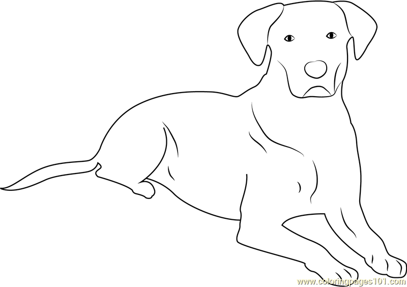 Dog taking Rest Coloring Page