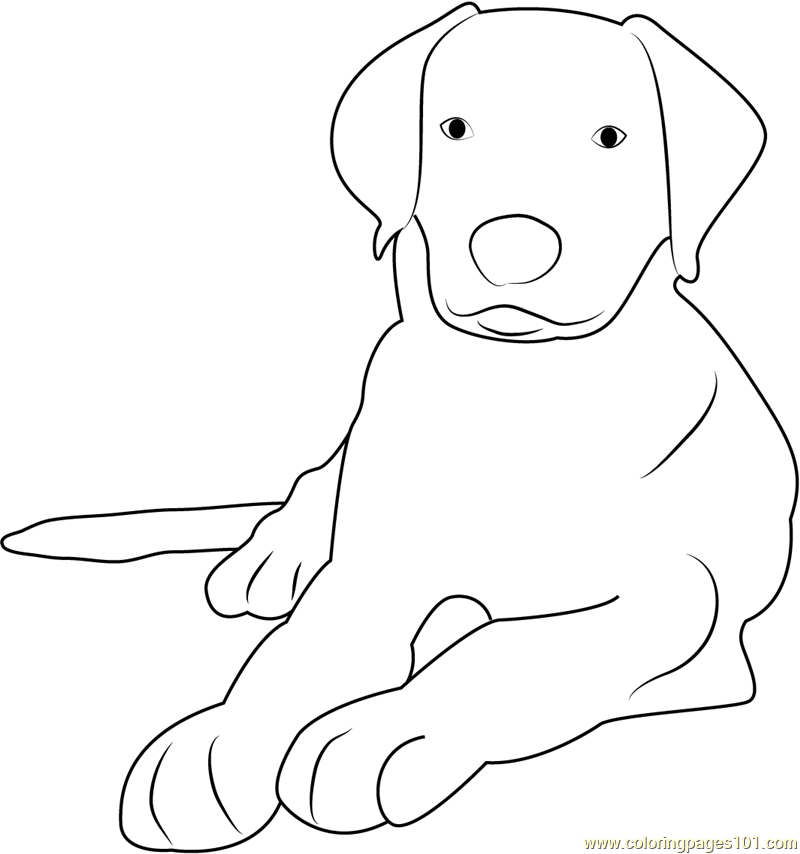 Duncan the Greater Swiss Mountain Coloring Page