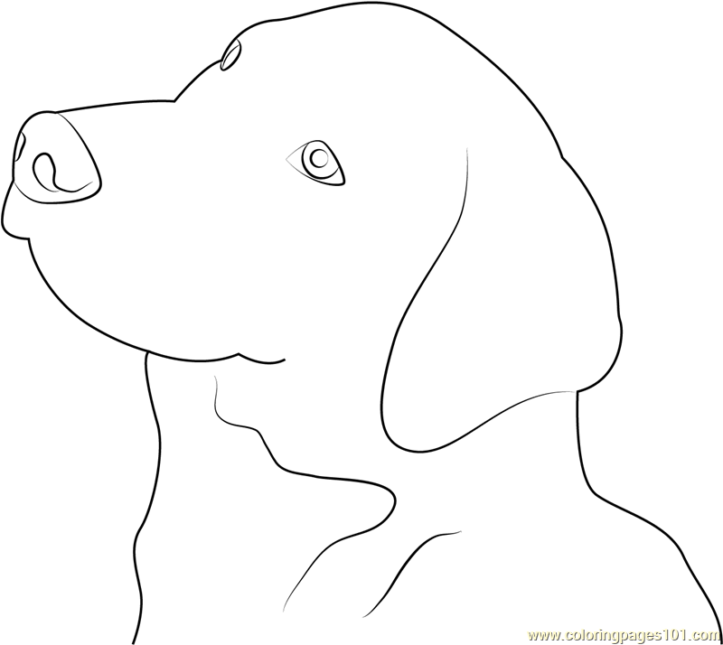 Great Swiss Mountain Dog Coloring Page