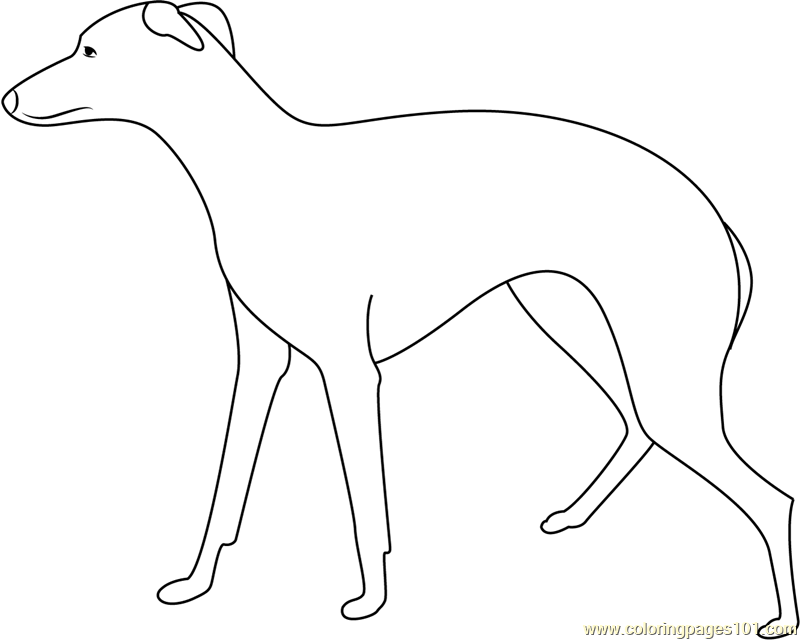 Greyhound Large Dog Coloring Page