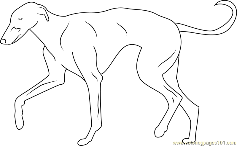 Greyhound Coloring Page Free Dog Coloring Pages