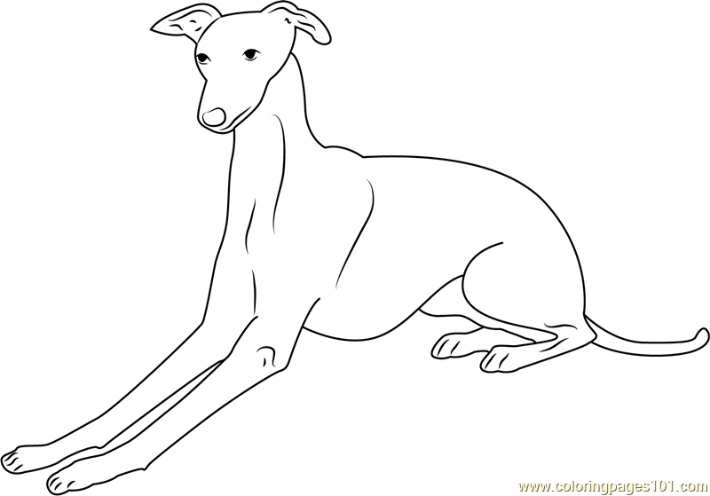 Italian Greyhound Coloring Page Free Dog Coloring Pages