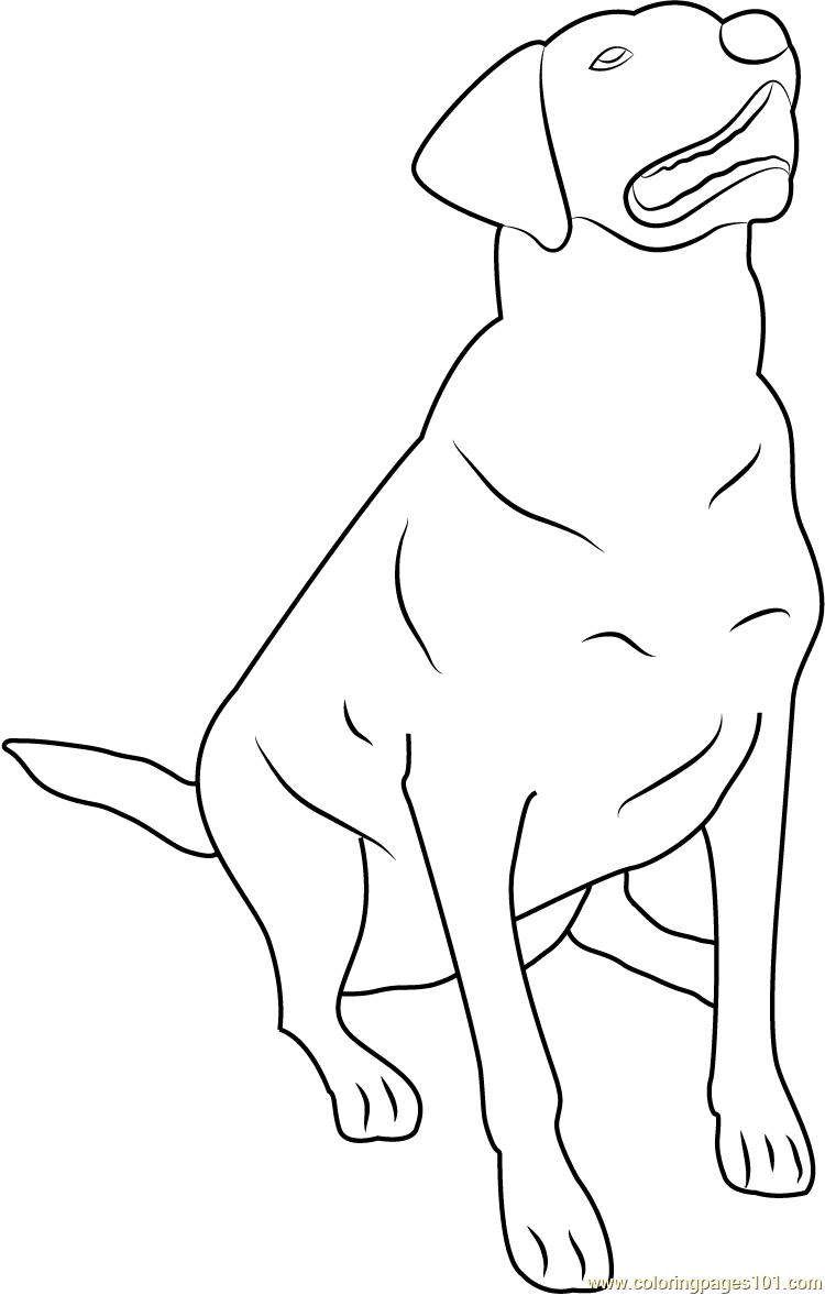 lab puppies coloring pages - photo#47