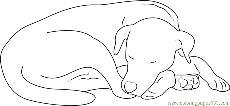 Let Sleeping Dog Coloring Page Free Dog Coloring Pages