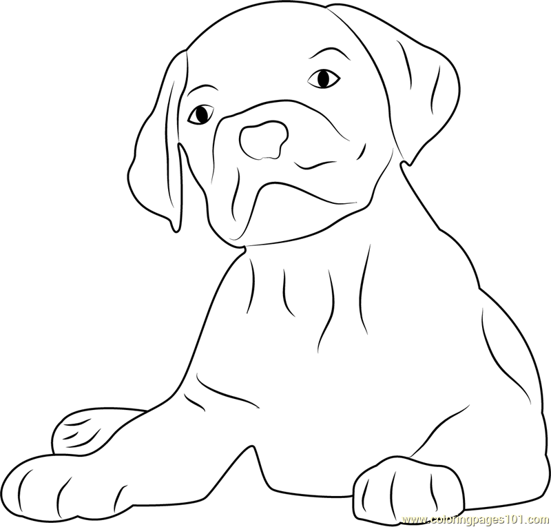 Lovely Dog Face Coloring Page - Free Dog Coloring Pages ...