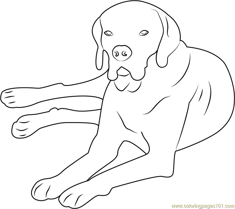 Portuguese Pointer Coloring Page