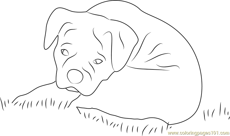Sad Dog Coloring Page Free Dog Coloring Pages