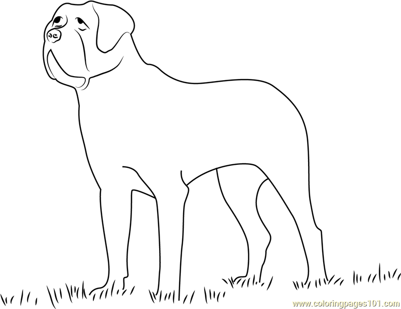 Saint Bernard Poil Court Coloring Page Free Dog Coloring