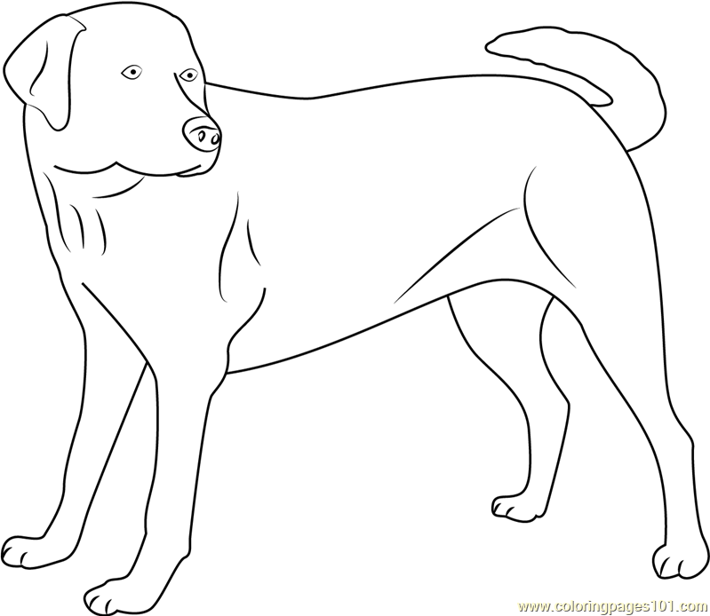 Yellow Labrador Looking new printable coloring page for ...