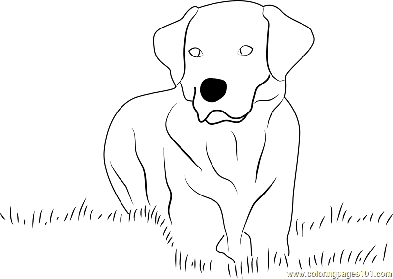 black lab coloring pages - yellow labrador retriever coloring page free dog
