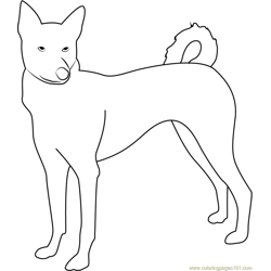 Canaan Dog Looking Me Free Coloring Page for Kids