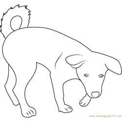 Canaan Dog Puppy Free Coloring Page for Kids