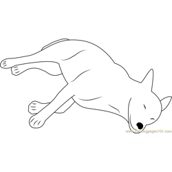Canaan Dog Sleeping
