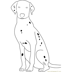 Dalmatian Dog Portrait Free Coloring Page for Kids
