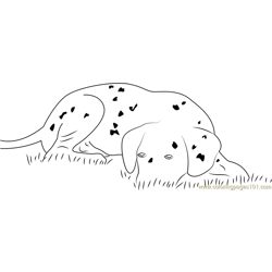 Dalmatian Dog Puppy Free Coloring Page for Kids