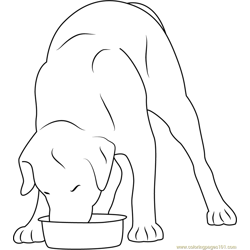Dog Eating in Stainless Steel Bowl