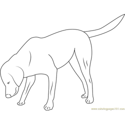 Dog Looking Somethings Free Coloring Page for Kids