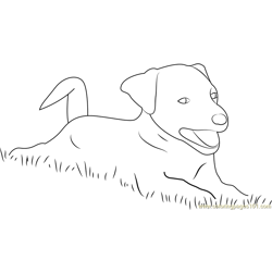Dog Playing in Grass