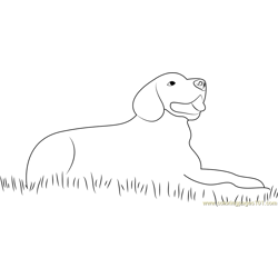 Dog Sitting in Grass Free Coloring Page for Kids