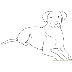 Dog taking Rest Free Coloring Page for Kids