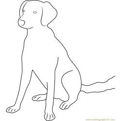 Good Looking Dog Free Coloring Page for Kids